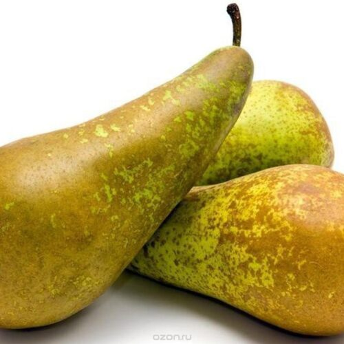 фрукт груша