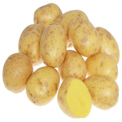 Белый картофель Гала