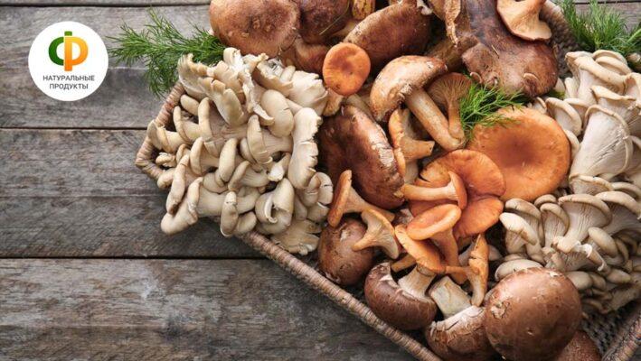 Сезонные грибы