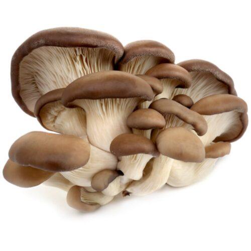 Вешенки грибы 500г